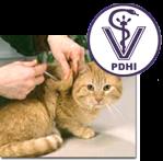kucing injeksi