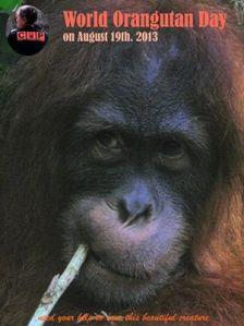 world orang utan day 19 agustus