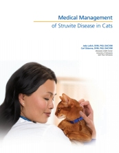 medical management of struvit disease in cats